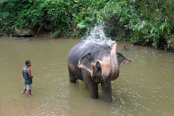 Spend half a day with Elephants